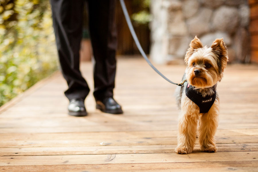 Must Love Dogs In This Lake Tahoe Lake Forest Retreat Sophisticated Outdoors Wedding | Photograph by Eric Asistin Photography