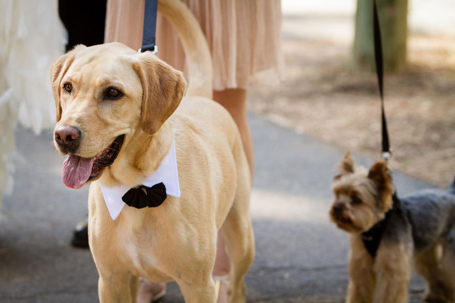 Must Love Dogs In This Lake Tahoe Lake Forest Retreat Sophisticated Outdoors Wedding