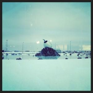 Reykjavik Airport Reflecting Pool