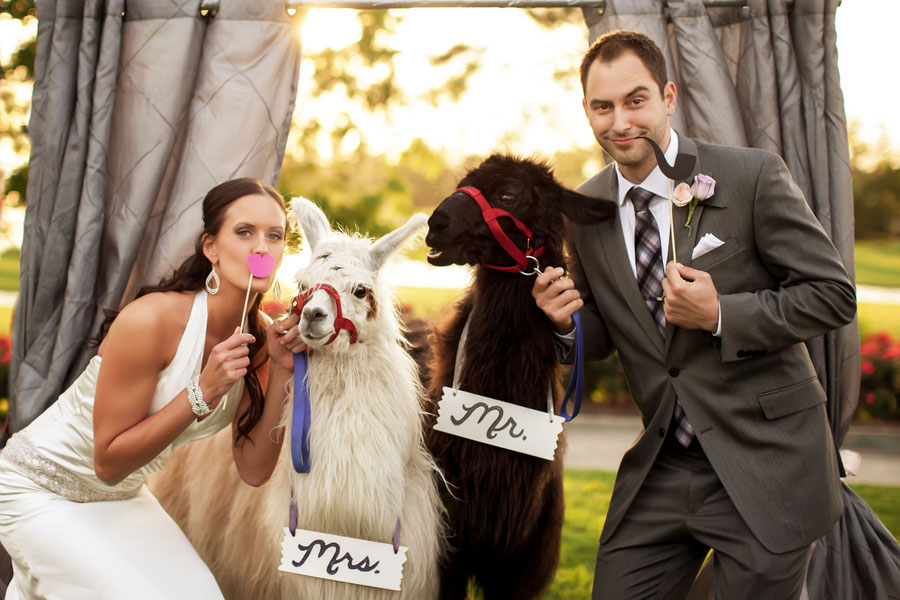 Wonderfully Whimsical Offbeat Wedding Dressed In Pink & Gray With A Side Of Llamas | Photograph by Grant & Deb Photographers