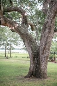 The_Lowndes_Grove_Plantation_DIY_Charleston_Wedding_STUDIO_1250_17-rv