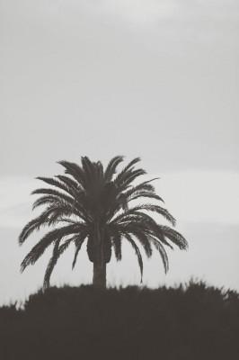 Carlsbad_California_Beach_Wedding_Gideon_Photography_12-rv
