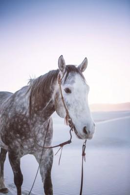 White_Sands_National_Monument_New_Mexico_Boho_Bride_Tony_Gambino_Photography_4-v