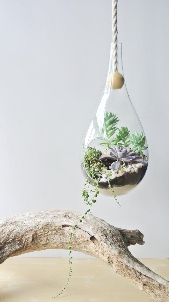 Dewdrop Hanging Planter Terrarium