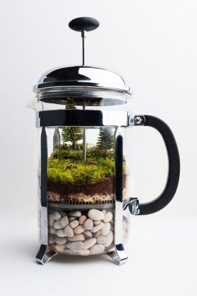 French Press Terrarium
