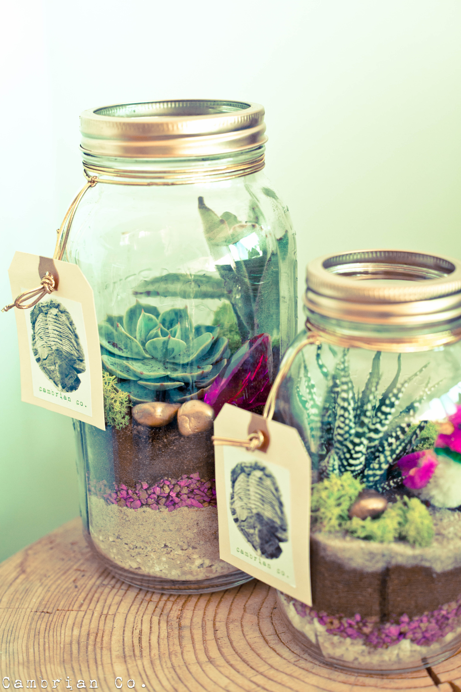 Terrarium wedding centerpieces