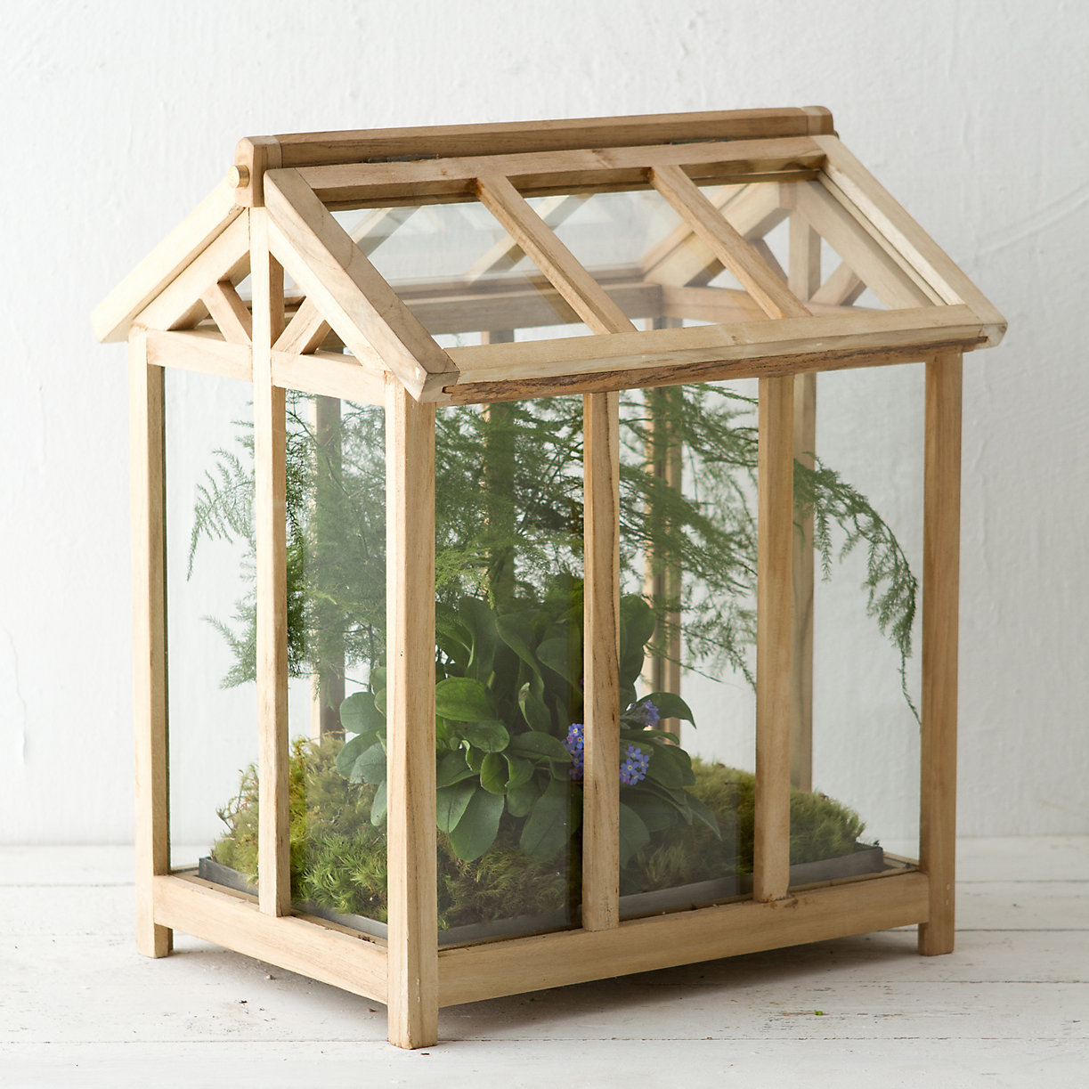 Teak House Terrarium Terrain