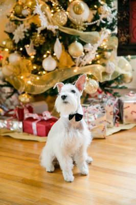 Texas_Christmas_Wedding_Luke_and_Cat_Photography_13-v