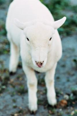 Modern_Country_Snow_White_Wedding_White_Rabbit_Photo_Boutique_15-v