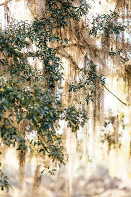 Middleton_Place_Engagement_Session_Erin_Morrison_Photography_11-rv