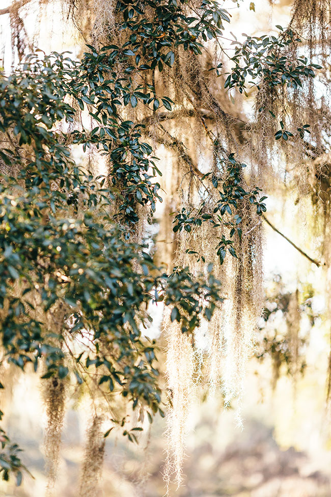 Late Winter Middleton Place Plantation Engagement Session | Photograph by Erin Morrison Photography  See The Full Story at https://storyboardwedding.com/late-winter-middleton-place-plantation-engagement-session/