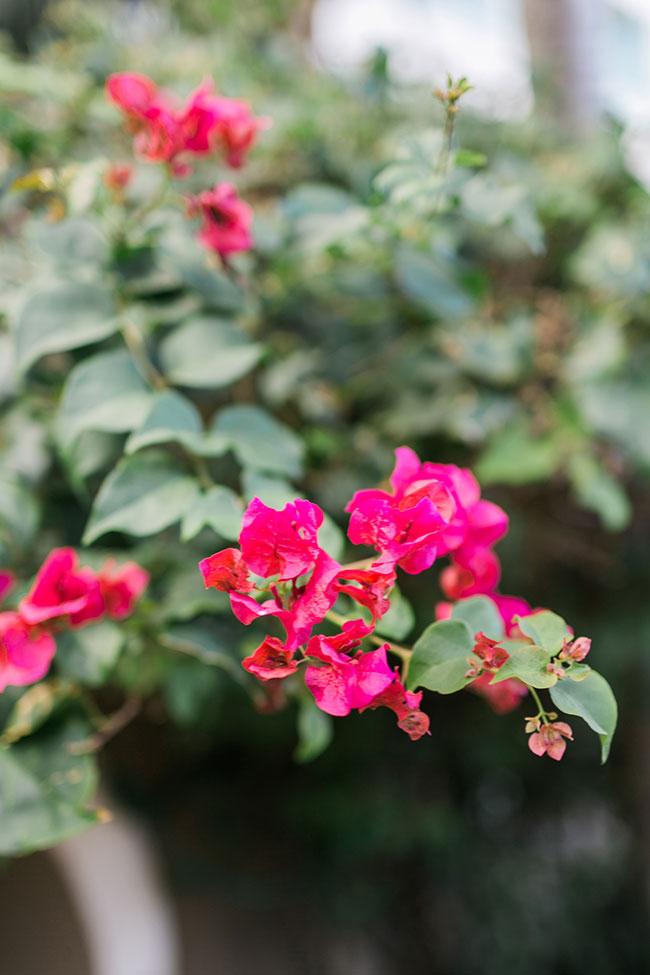 Sandals-Royal-Bahamian-Lanscape-Floral-(5)