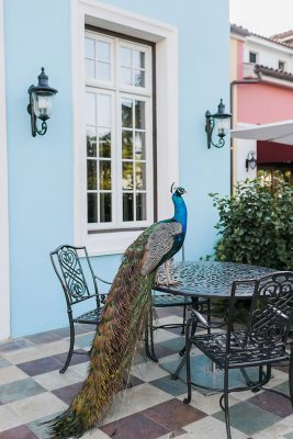 Sandals-South-Coast-Property-Peacock